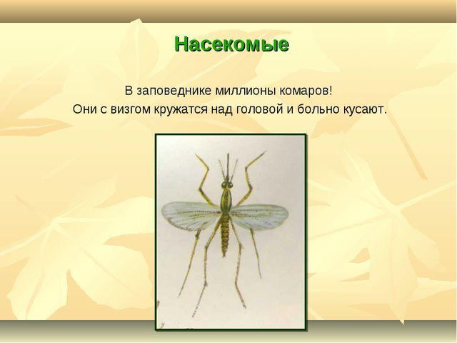 Насекомые В заповеднике миллионы комаров! Они с визгом кружатся над головой...