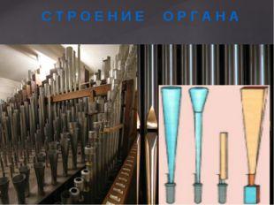 Трубы и регистры Язычковые  Лабиальные (губа) С Т Р О Е Н И Е О Р Г