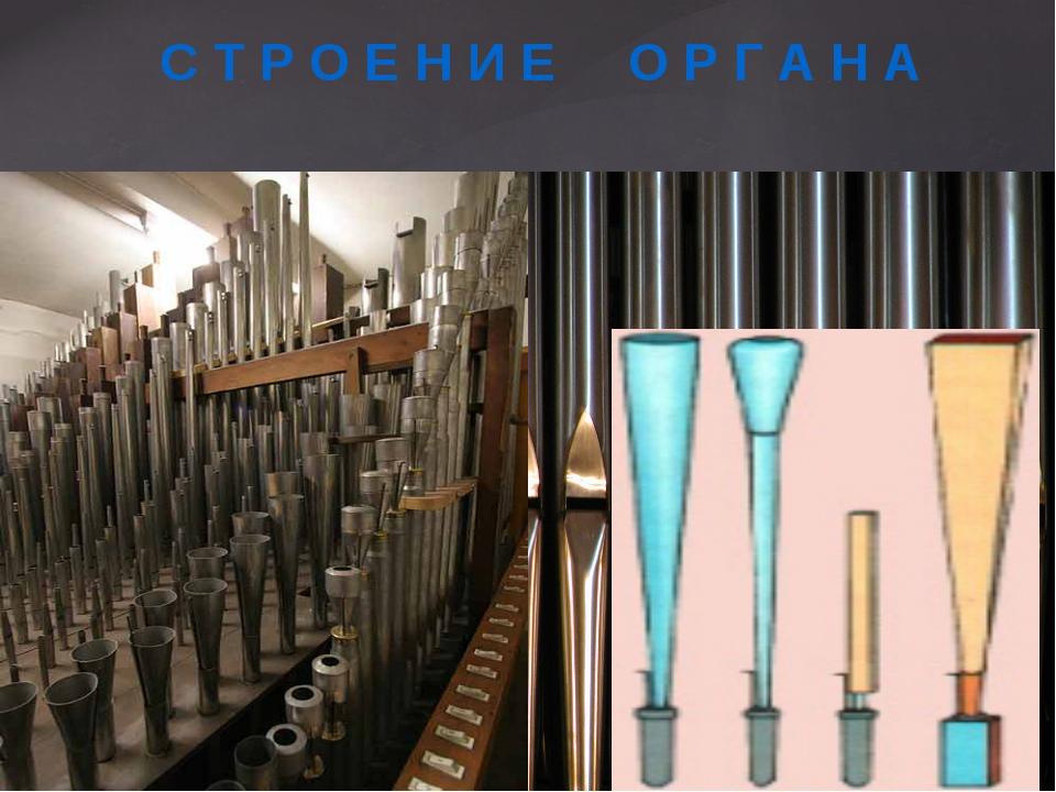 Трубы и регистры Язычковые  Лабиальные (губа) С Т Р О Е Н И Е О Р Г...