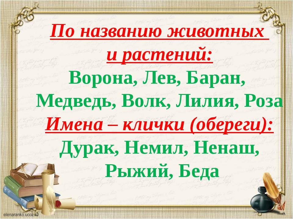 По названию животных и растений: Ворона, Лев, Баран, Медведь, Волк, Лилия, Ро...