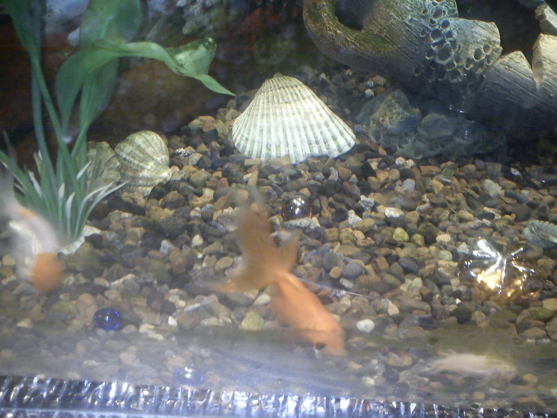 J:\фото рыбки\DSC00176.JPG
