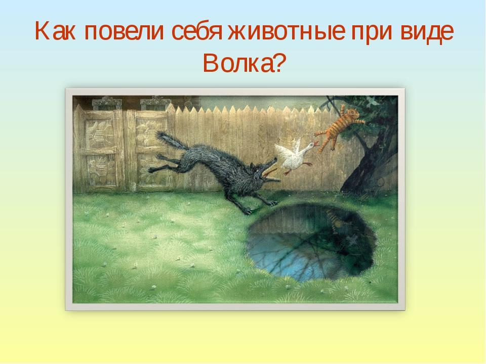Как повели себя животные при виде Волка?