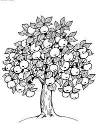 Картинки по запросу картинка раскраска яблони
