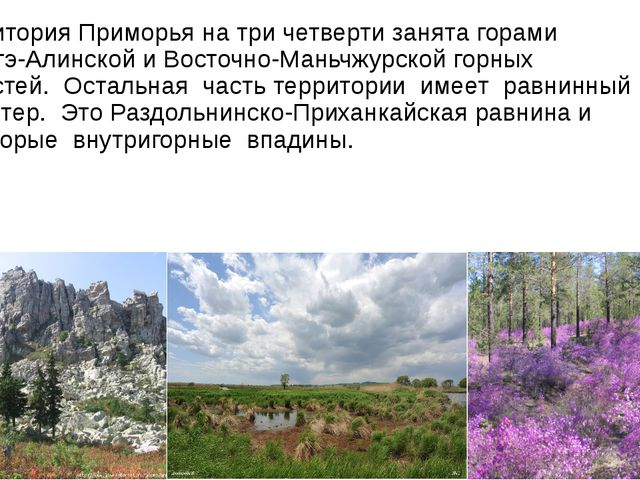 Территория Приморья на три четверти занята горами Сихотэ-Алинской и Восточн...