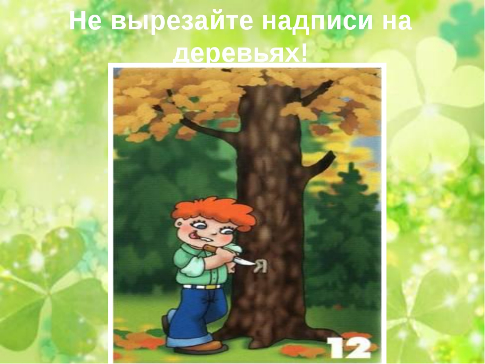 Не вырезайте надписи на деревьях!