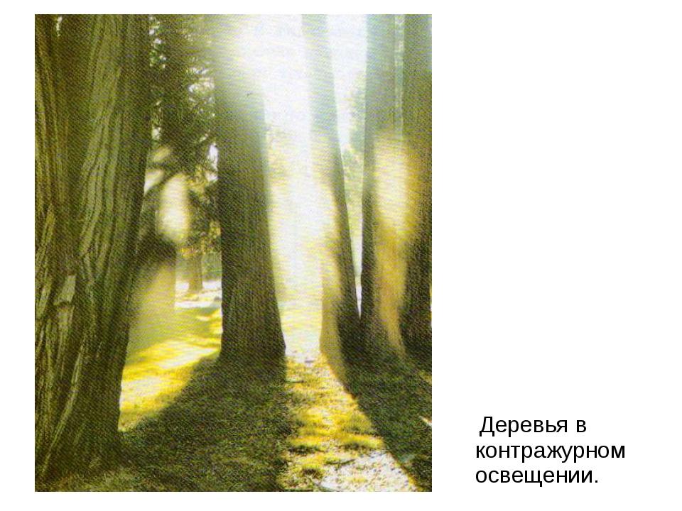 Деревья в контражурном освещении.