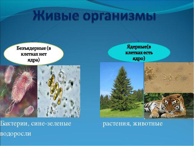 Бактерии, сине-зеленые растения, животные водоросли