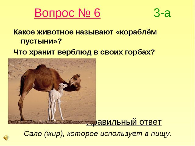 Вопрос № 6 3-а Какое животное называют «кораблём пустыни»? Что хранит верблю...
