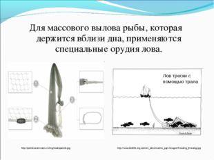 Для массового вылова рыбы, которая держится вблизи дна, применяются специальн