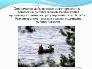 Хищническая добыча также может привести к истощению рыбных запасов. Рациональ