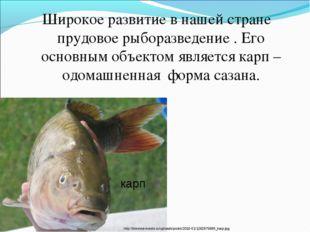 Широкое развитие в нашей стране прудовое рыборазведение . Его основным объект