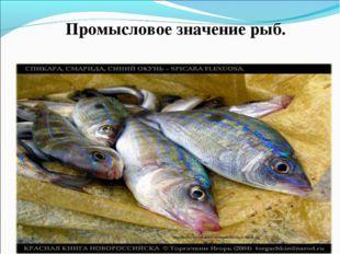 Промысловое значение рыб. http://redbooknvrsk.narod.ru/torgachkin-dscn1851rb.