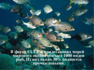 В фауне СССР и прилегающих морей мирового океана обитает 1000 видов рыб. Из н