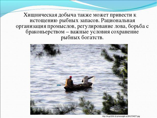 Хищническая добыча также может привести к истощению рыбных запасов. Рациональ...