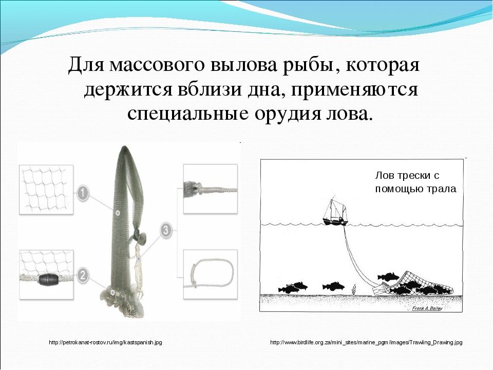 Для массового вылова рыбы, которая держится вблизи дна, применяются специальн...