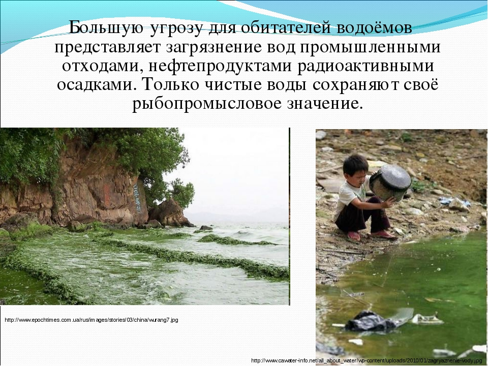 Большую угрозу для обитателей водоёмов представляет загрязнение вод промышлен...