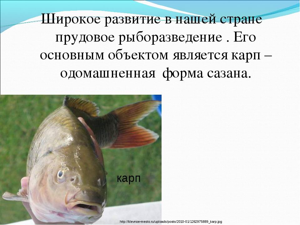 Широкое развитие в нашей стране прудовое рыборазведение . Его основным объект...