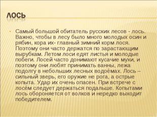 Самый большой обитатель русских лесов - лось. Важно, чтобы в лесу было много