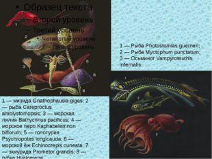 1 — мизида Gnathophausia gigas; 2 — рыба Careproctus amblystomopsis; 3 — морс