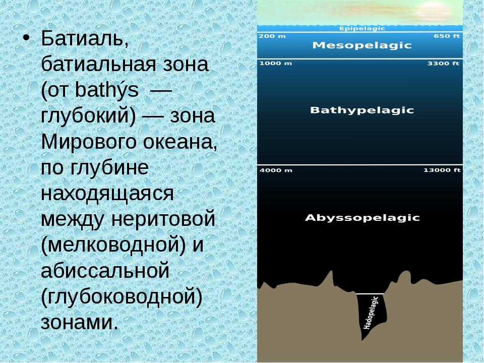 Батиаль, батиальная зона (от bathýs — глубокий) — зона Мирового океана, по гл...