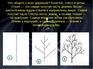 Что общего у всех деревьев? Конечно, ствол и ветки. Ствол — это самая толстая