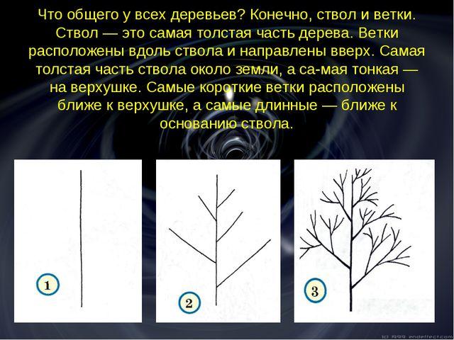 Что общего у всех деревьев? Конечно, ствол и ветки. Ствол — это самая толстая...