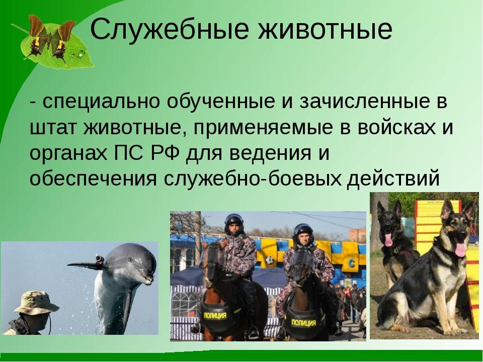 Служебные животные - специально обученные и зачисленные в штат животные, прим...