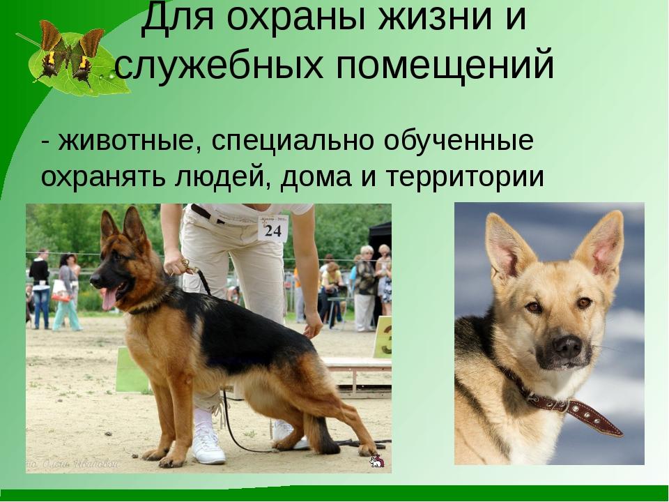 Для охраны жизни и служебных помещений - животные, специально обученные охран...