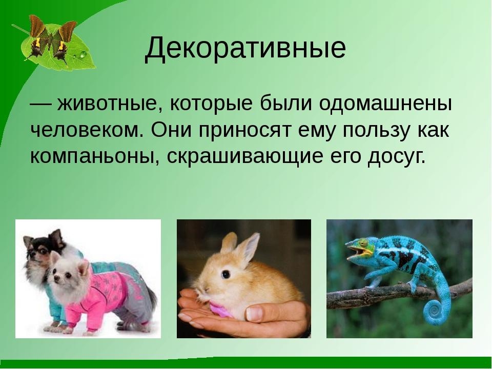 Декоративные — животные, которые были одомашнены человеком. Они приносят ему...