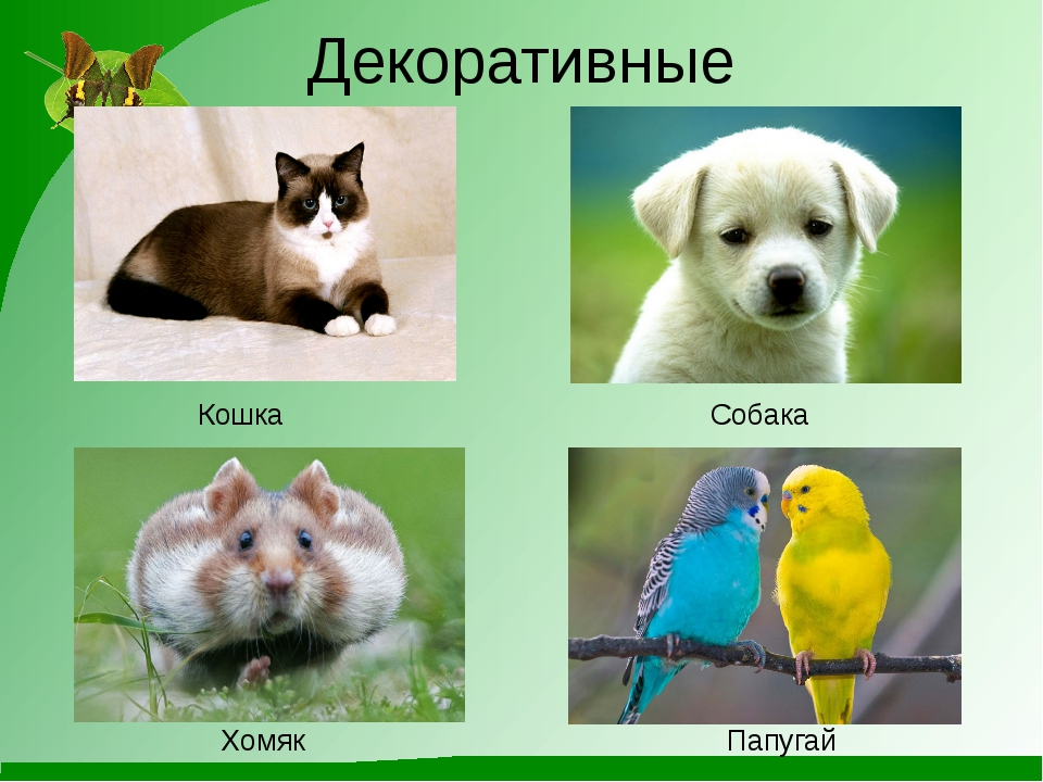Декоративные Кошка Собака Хомяк Папугай