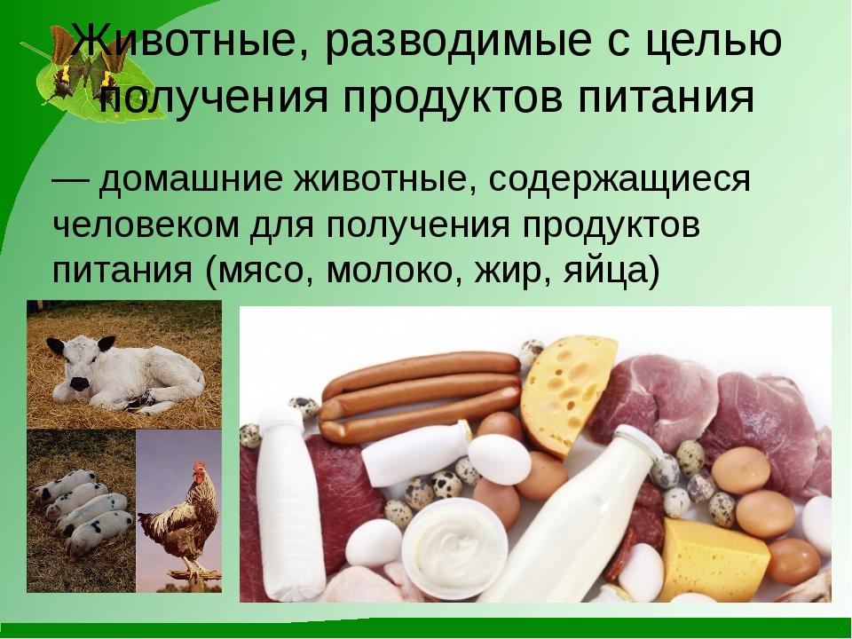 Животные, разводимые с целью получения продуктов питания — домашние животные,...