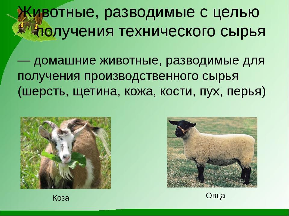 — домашние животные, разводимые для получения производственного сырья (шерсть...