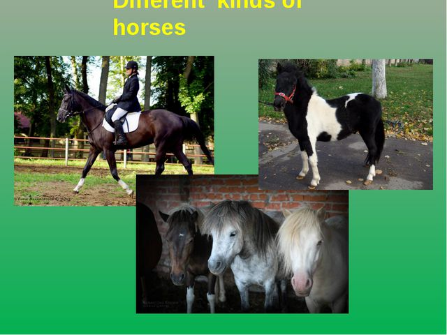 Different kinds of horses