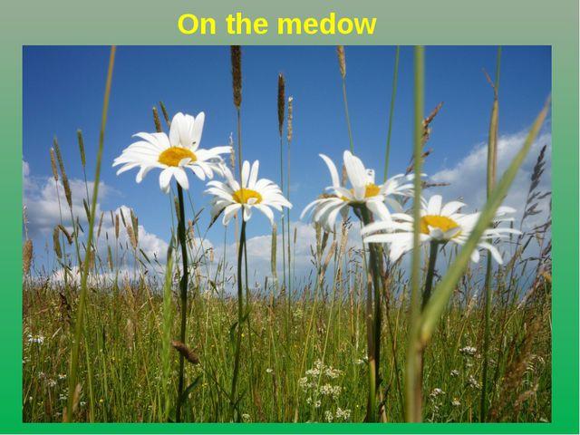 On the medow