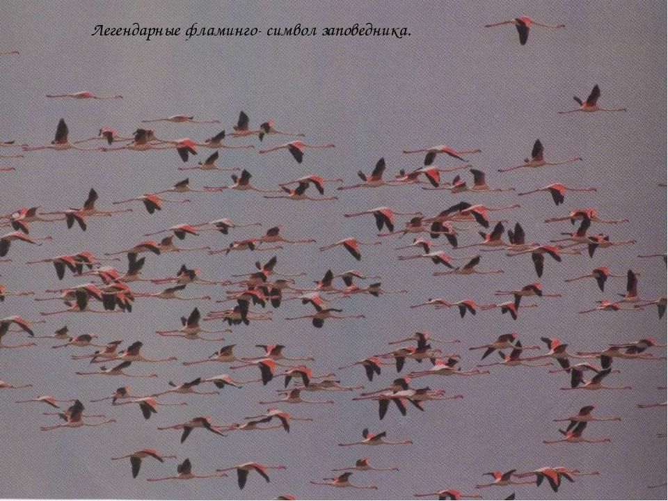 Легендарные фламинго- символ заповедника.