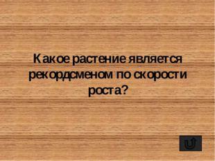 Самым распространённым видом обуви на Руси всегда были лапти. Естественно, чт