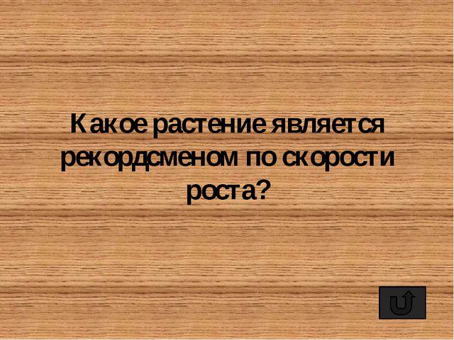 Самым распространённым видом обуви на Руси всегда были лапти. Естественно, чт...