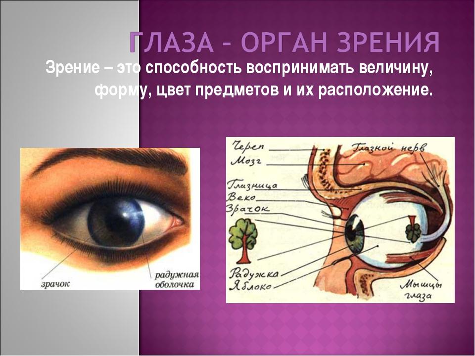 Зрение – это способность воспринимать величину, форму, цвет предметов и их ра...