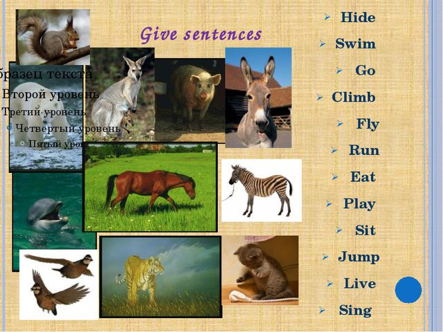 Give sentences Hide Swim Go Climb Fly Run Eat Play Sit Jump Live Sing