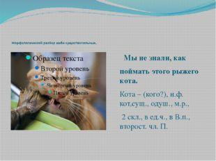 Мы не знали, как поймать этого рыжего кота. Кота – (кого?), н.ф. кот,сущ., о