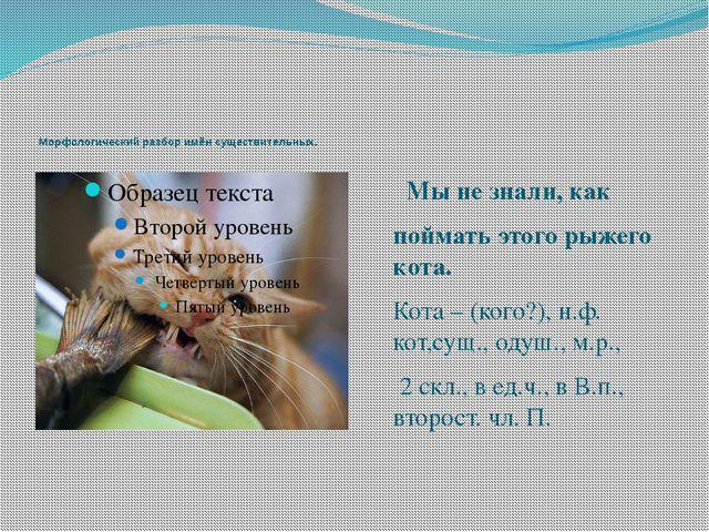Мы не знали, как поймать этого рыжего кота. Кота – (кого?), н.ф. кот,сущ., о...