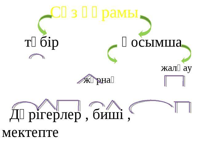 Сөз құрамы түбір қосымша жұрнақ жалғау Дәрігерлер , биші , мектепте