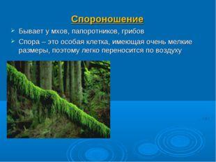Спороношение Бывает у мхов, папоротников, грибов Спора – это особая клетка, и