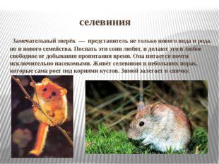 селевиния Замечательный зверёк — представитель не только нового вида и род