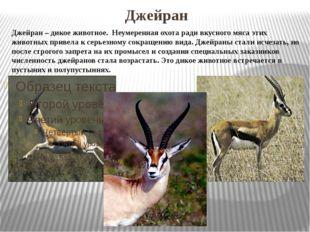 Джейран Джейран – дикое животное. Неумеренная охота ради вкусного мяса этих