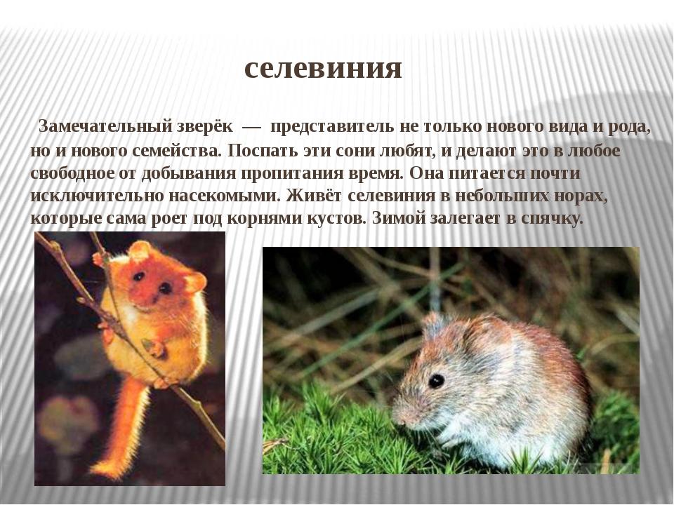 селевиния Замечательный зверёк — представитель не только нового вида и род...