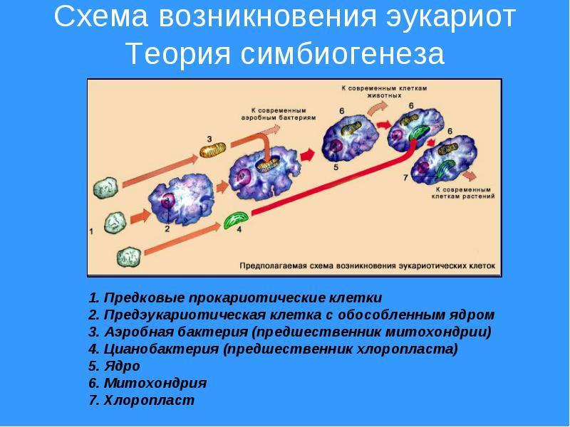 http://fullref.ru/files/79/3359f2a2fa8dde7c147a9350e9e98caf.html_files/rId15.jpg