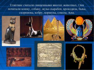 Египтяне считали священными многих животных. Они почитали кошку, собаку, жука