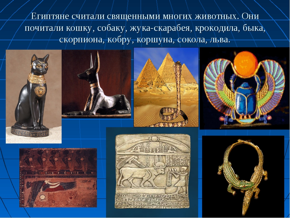 Египтяне считали священными многих животных. Они почитали кошку, собаку, жука...