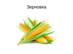 Зерновка
